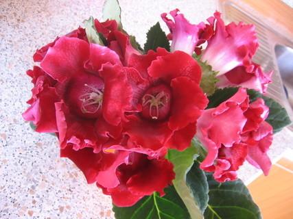 FOTKA - květina 3
