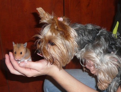 FOTKA - myšičko myš, pojď ke mě blíž