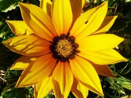 FOTKA - zářící sluníčko