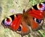 Krása motýlí