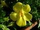 Květ makro
