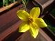Květ v truhlíku
