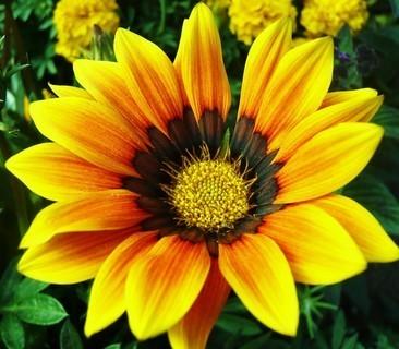 FOTKA - kytka žlutá