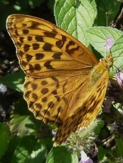 FOTKA - motýl++