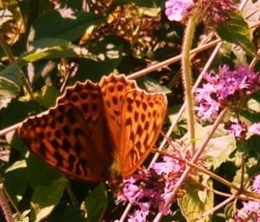 FOTKA - motýlek,,