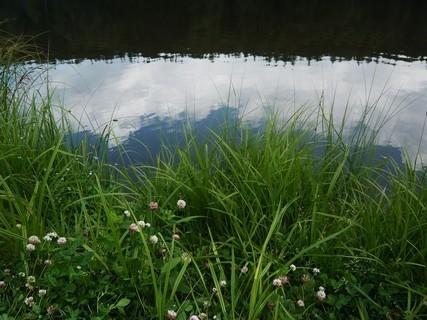 FOTKA - místní rybník - Balaton