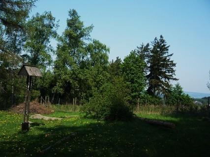 FOTKA - na procházce lesíkem