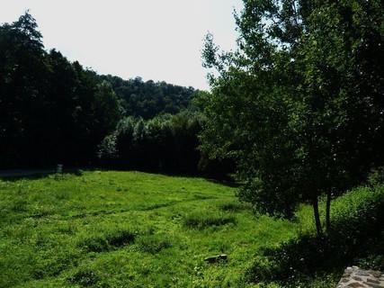 FOTKA - na procházce lesíkem,