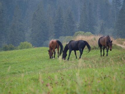 FOTKA - Kone