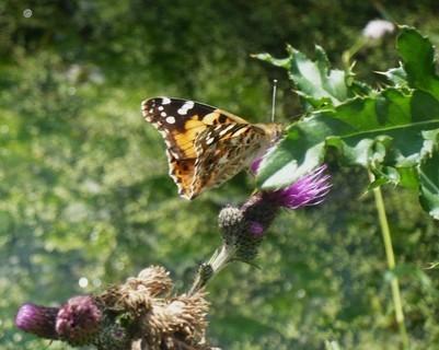 FOTKA - motýlek-