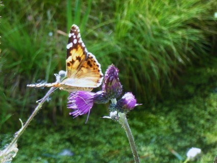 FOTKA - motýlek+