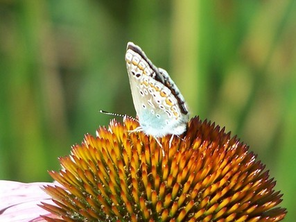 FOTKA - Motýlek  na kytičce,