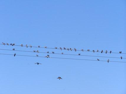 FOTKA - Procházka-holubi