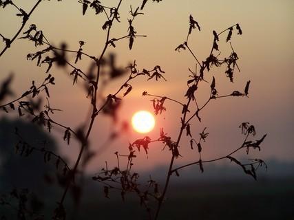 FOTKA - Sluníčko v trávě