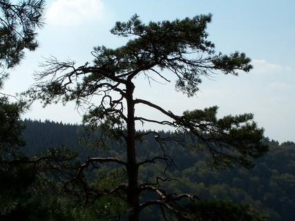 FOTKA - Po skalách až na vrcholky stromů
