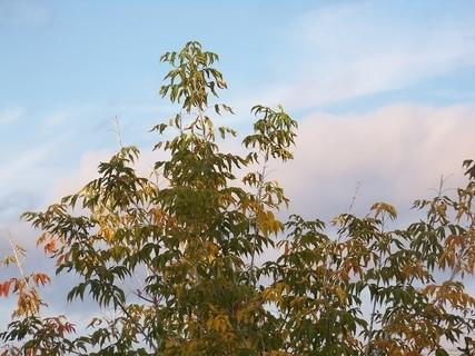 FOTKA - barevný stromek