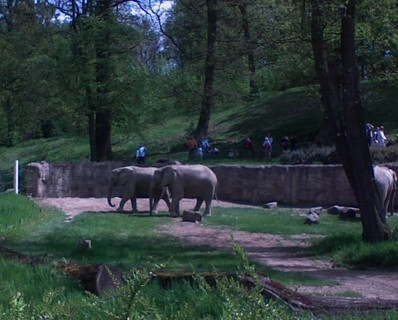 FOTKA - zoo 6