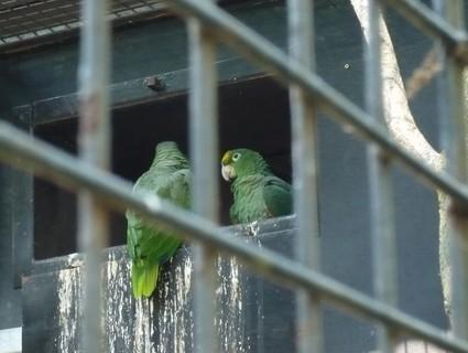 FOTKA - zoo 22