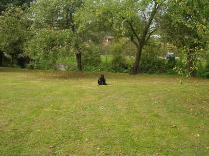 FOTKA - Já se mám, takovou  zahradu nemáte..