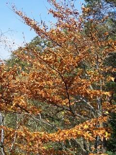FOTKA - Zlaté lístky podzimu