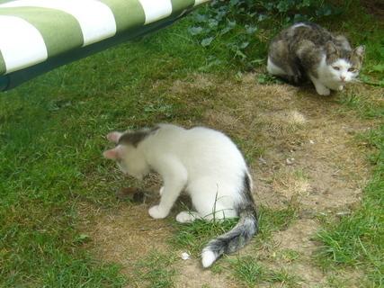 FOTKA - Kot�