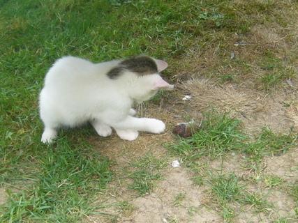 FOTKA - Kotě.