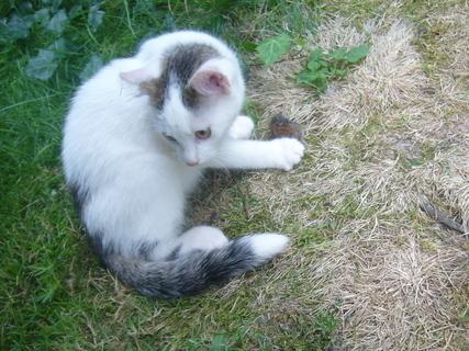 FOTKA - Kotě..