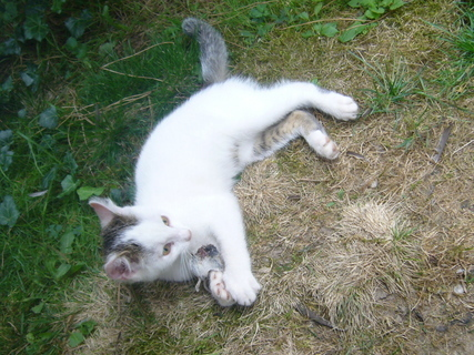 FOTKA - Kotě...