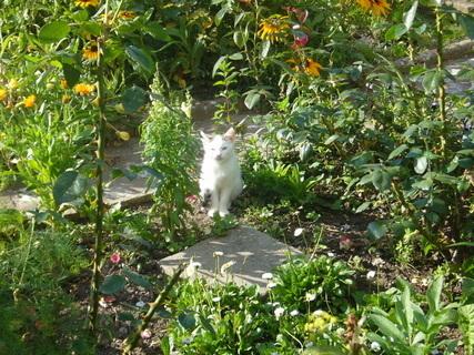 FOTKA - Kotě....,