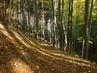 podzimní cestička