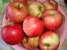 ze zahrádky - jablíčka