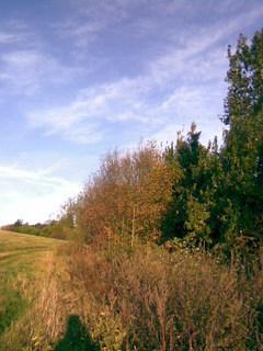 FOTKA - Cestička k lesu