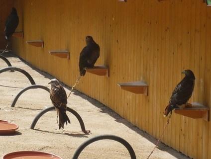 FOTKA - ptáci.