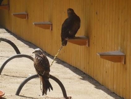FOTKA - ptáci,