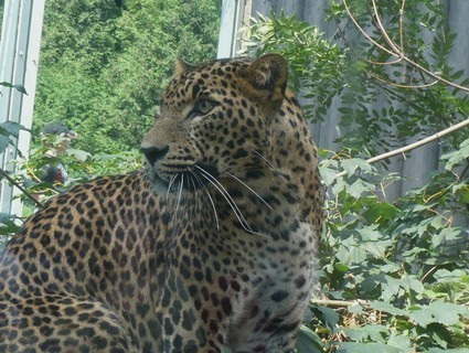 FOTKA - z zoo Jihlava