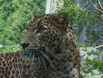 FOTKA - z zoo Jihlava.