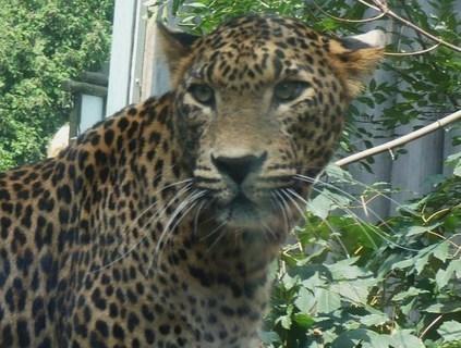 FOTKA - z zoo Jihlava...