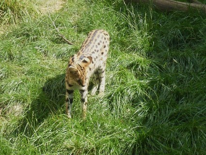 FOTKA - z zoo Jihlava....