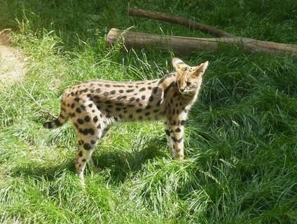 FOTKA - z zoo Jihlava........