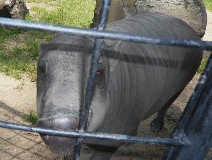 FOTKA - z zoo Jihlava,