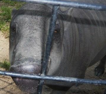 FOTKA - z zoo Jihlava,,