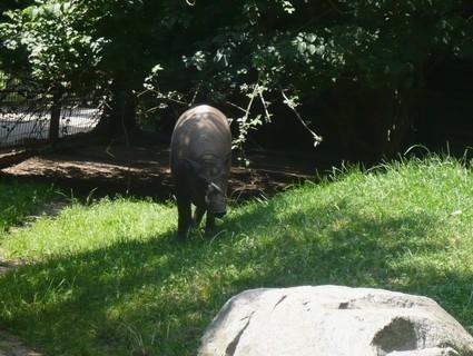 FOTKA - z zoo Jihlava,,,