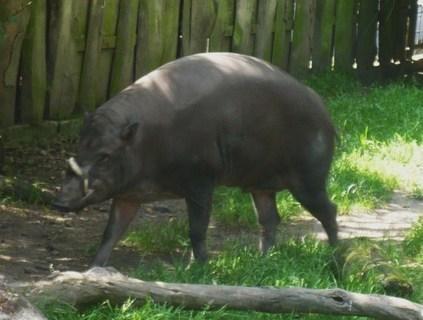 FOTKA - z zoo Jihlava,,,,,,