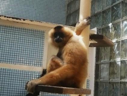 FOTKA - z zoo Jihlava..........