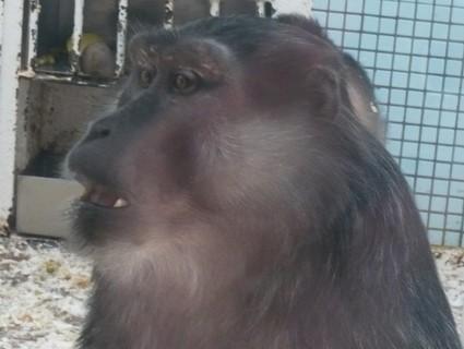 FOTKA - z zoo Jihlava............