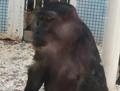 FOTKA - z zoo v Jihlavě