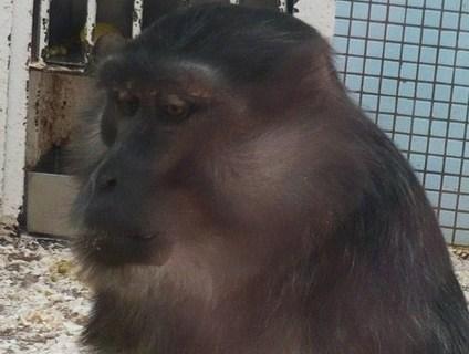 FOTKA - z zoo v Jihlavě.