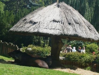 FOTKA - v zoo Jihlava.