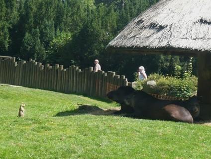 FOTKA - v zoo Jihlava....
