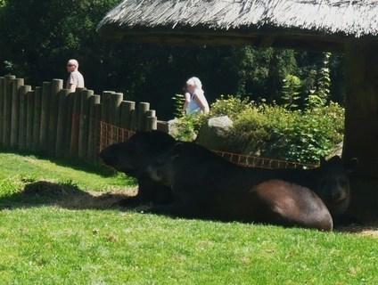 FOTKA - v zoo Jihlava.....